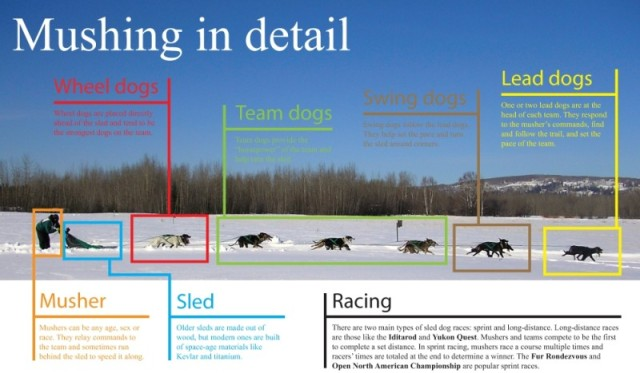 Mushing_graphicx-800x467