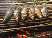 cooking-fish