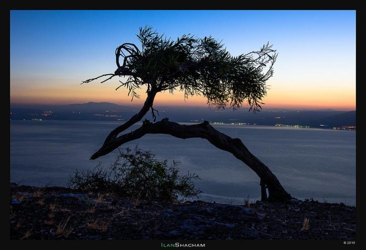 Israel Bent Tree