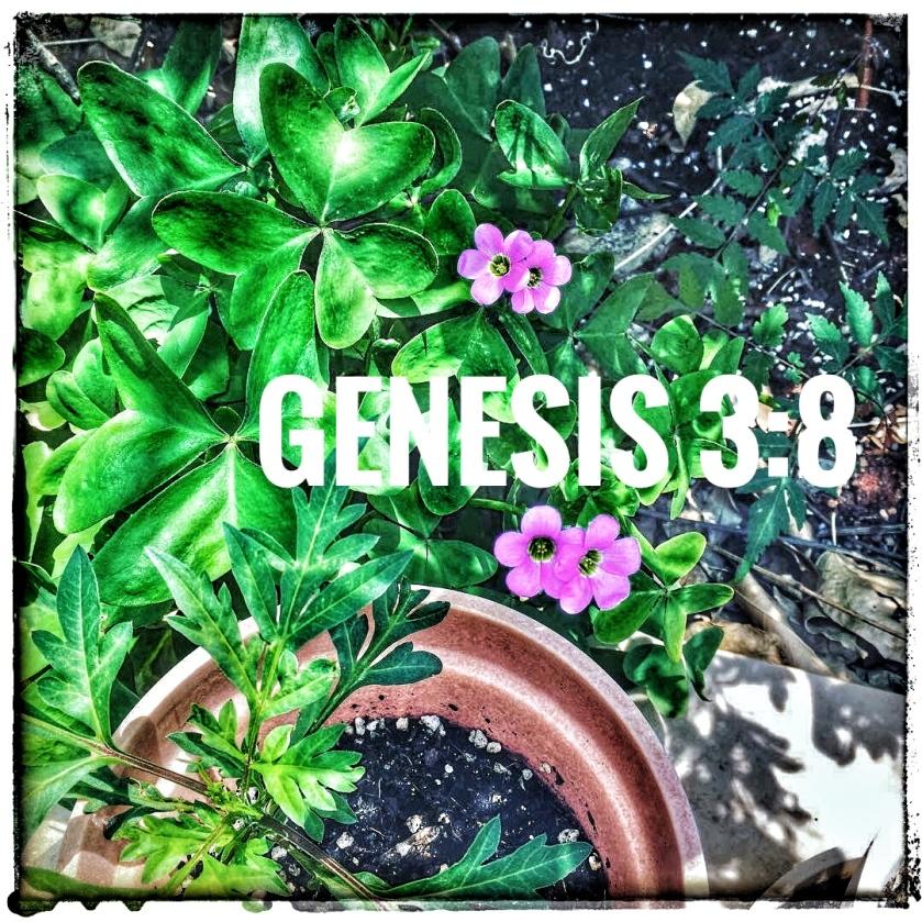 Genesis 3 8