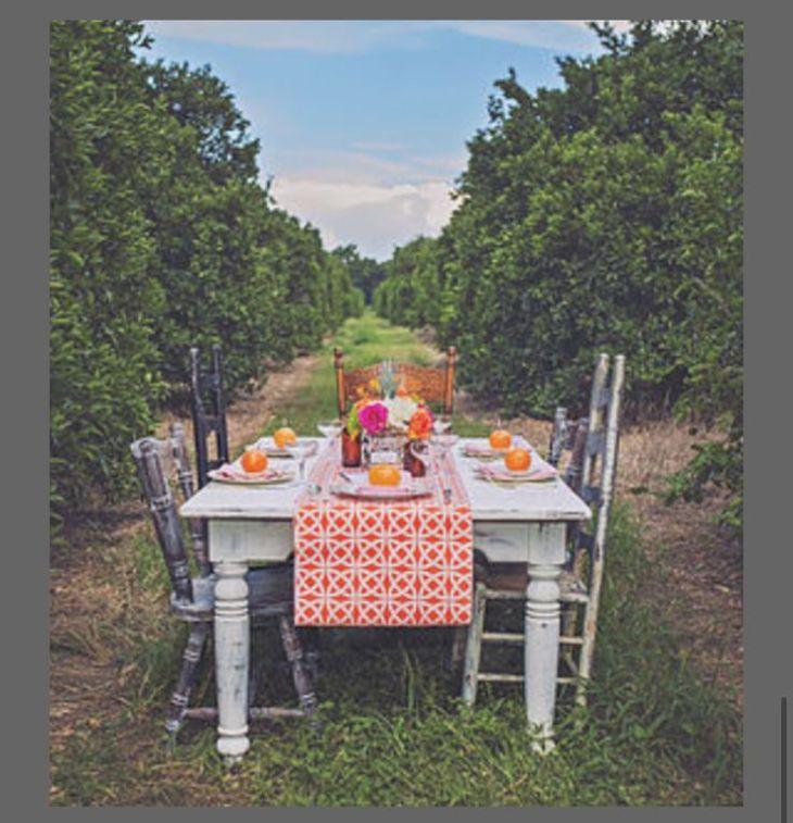 --orange-grove-old-florida