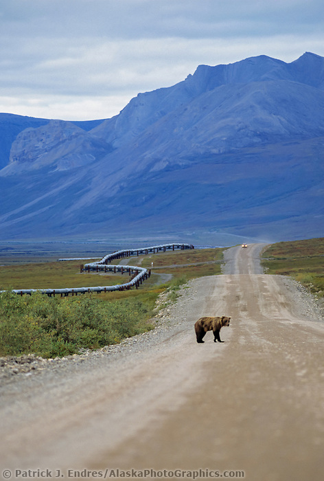 Bear highway